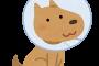 保護犬だったコトちゃんの初体験は「家に戻る」ということ。